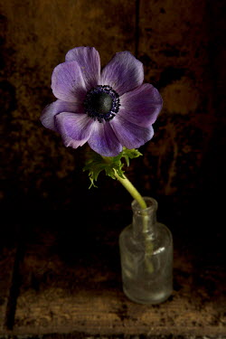 Allan Jenkins PURPLE FLOWER IN GLASS BOTTLE Flowers