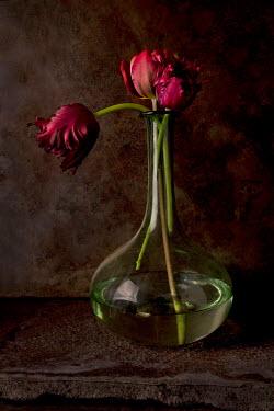 Allan Jenkins TULIPS IN GLASS VASE Flowers