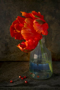 Allan Jenkins ORANGE FLOWER IN GLASS VASE WITH PIPS Flowers