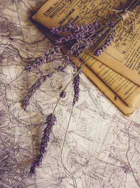 Jane Morley LAVENDER WITH OLD MAPS Flowers