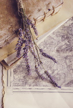 Jane Morley LAVENDER ON OLD MAP AND BOOKS Flowers