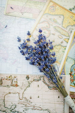 Susan O'Connor LAVENDER LYING ON OLD MAPS Flowers