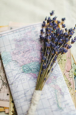 Susan O'Connor LAVENDER LYING ON OLD MAPS Miscellaneous Objects