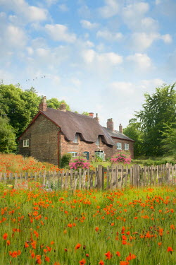 Lee Avison THATCHED COTTAGE WITH RED POPPIES Houses