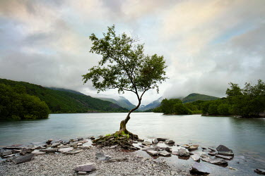 James Kerwin TREE BY LAKE WITH MISTY MOUNTAINS Lakes/Rivers