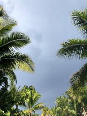 ILINA SIMEONOVA PLAM TREES AND BLUE SKY FROM BELOW Trees/Forest