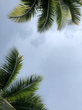 ILINA SIMEONOVA PALM TREES FROM BELOW Trees/Forest