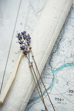Jill Ferry LAVENDER FLOWERS ON MAP Flowers
