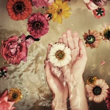 Oana Stoian HANDS HOLDING FLOWER IN WATER Body Detail
