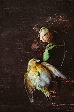 Magdalena Wasiczek DEAD BIRD WITH DEAD FLOWER Flowers