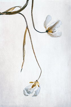 Magdalena Wasiczek WHITE FLOWERS WITH LONG STEMS Flowers