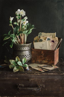 Magdalena Wasiczek PLANT POT WITH OLD TIN WITH LETTERS Flowers