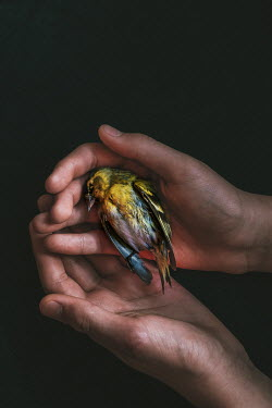 Magdalena Wasiczek DEAD BIRD HELD IN HANDS Birds