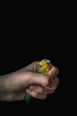 Magdalena Wasiczek DEAD BIRD IN HAND Flowers/Plants