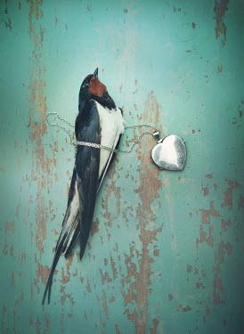 Mark Owen DEAD BIRD LYING WITH SILVER LOCKET Birds