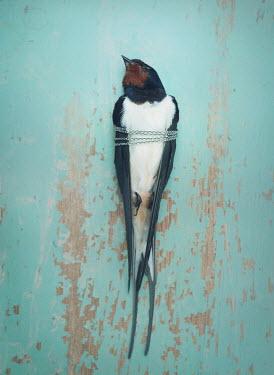 Mark Owen DEAD BIRD WRAPPED IN SILVER CHAIN Birds