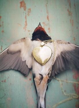Mark Owen DEAD BIRD LYING WITH GOLD LOCKET Birds