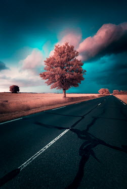 David Keochkerian COUNTRY ROAD THROUGH CROP FIELDS Fields