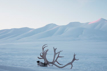 Marta Bevacqua SKULL WITH ANTLERS IN SNOWY LANDSCAPE Animals