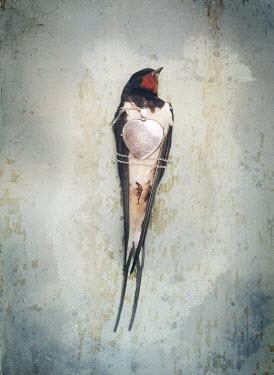 Mark Owen DEAD BIRD WRAPPED WITH SILVER LOCKET Birds