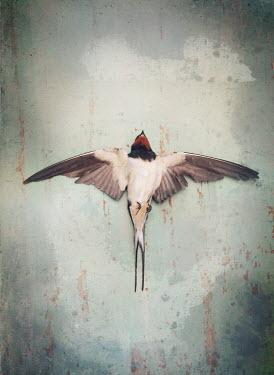 Mark Owen DEAD BIRD LYING WITH WINGS SPREAD Birds