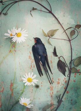 Mark Owen DEAD BIRD LYING WITH PLANT AND DAISIES Birds