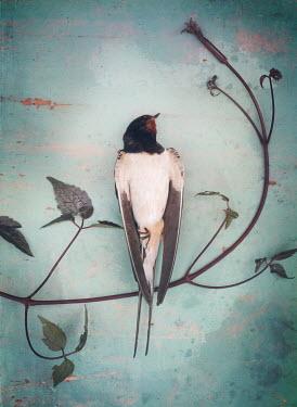 Mark Owen DEAD BIRD LYING WITH LEAVES Birds