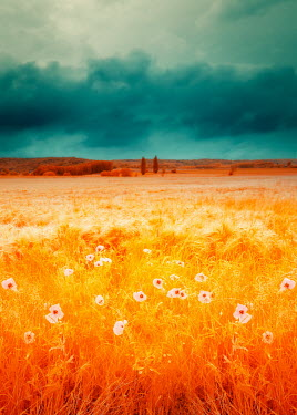 David Keochkerian FIELD WITH WHITE FLOWERS Fields
