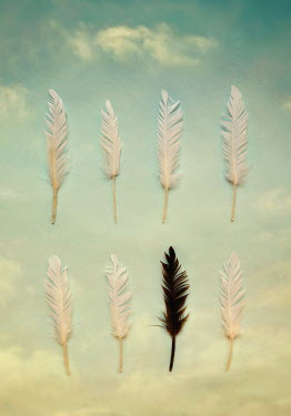 Lyn Randle SEVEN WHITE FEATHERS AND ONE BLACK Miscellaneous Objects