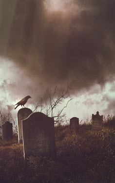 Sandra Cunningham GRAVEYARD WITH BIRD AND STORMY SKY Statuary/Gravestones