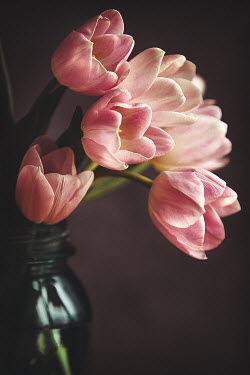 Lisa Bonowicz CLOSE UP OF PINK TULIPS IN VASE Flowers