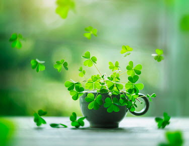 Ashraful Arefin GREEN FLOWERS IN GREEN CUP Flowers