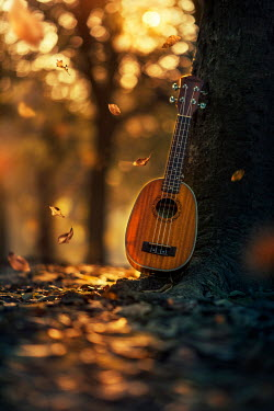 Ashraful Arefin GUITAR BY TREE WITH AUTUMN LEAVES Musical Instruments