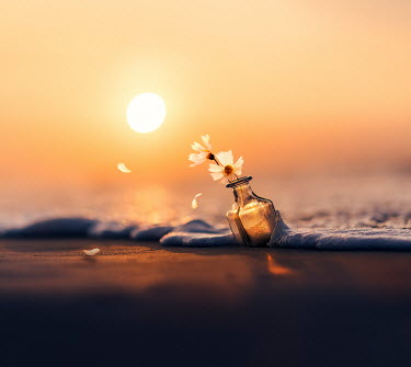 Ashraful Arefin FLOWERS IN BOTTLE IN SEA AT SUNSET Flowers