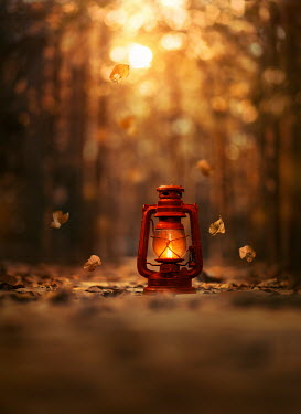 Ashraful Arefin RED LANTERN IN AUTUMN FOREST Miscellaneous Objects