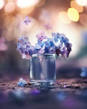 Ashraful Arefin PURPLE FLOWERS IN JAR WITH SUNLIGHT Flowers