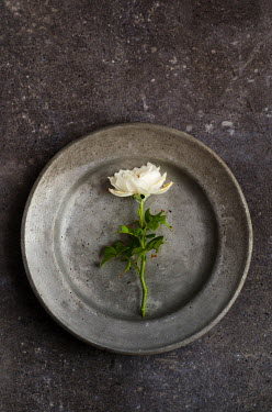 Cristina Mitchell CUT FLOWER ON PEWTER TRAY Flowers