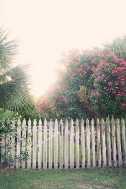 Susan Fox GARDEN WITH PICKET FENCE AND PINK FLOWERS Flowers/Plants