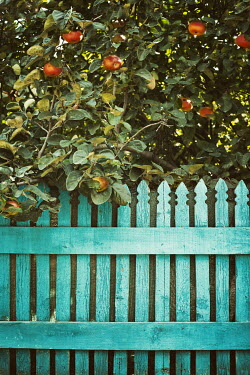 Svetoslava Madarova apple tree with turquoise fence Gates