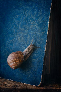 Magdalena Wasiczek SNAIL CRAWLING ON BLUE BOOK Animals