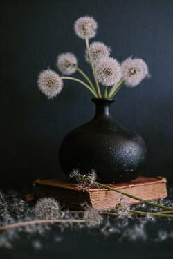 Magdalena Wasiczek DANDELIONS IN VASE Flowers