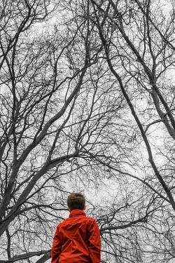 Stephen Mulcahey BOY IN RED JACKET UNDERNEATH TREES Children