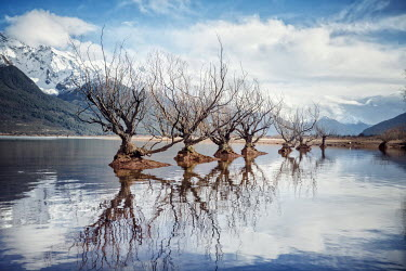 Evelina Kremsdorf TREES IN LAKE WITH MOUNTAINS Lakes/Rivers