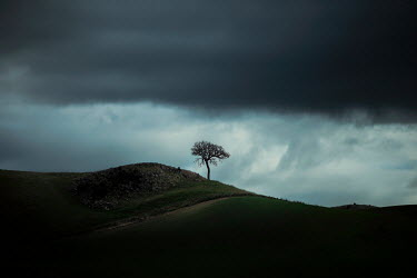 Evelina Kremsdorf ISOLATED TREE IN STORMY LANDSCAPE Trees/Forest