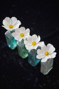 Liz Dalziel WHITE FLOWERS IN COLOURED BOTTLES Flowers
