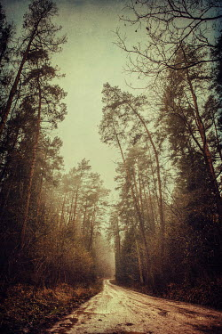 Magdalena Russocka EMPTY COUNTRY LANE IN AUTUMN Paths/Tracks