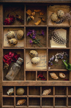 Jane Morley NATURE COLLECTION IN WOODEN BOXES Miscellaneous Objects