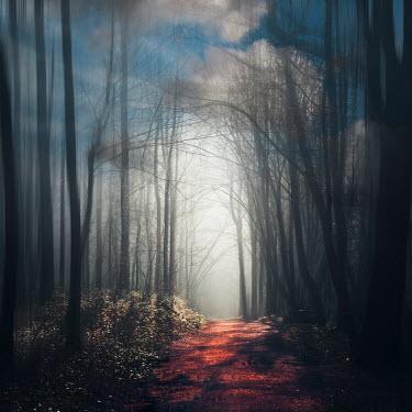 Dirk Wustenhagen SUNLIT PATH IN FOREST AT DUSK Paths/Tracks