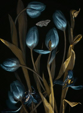 Magdalena Wasiczek CLOSE UP OF BLUE TULIPS WITH BUTTERFLY Insects