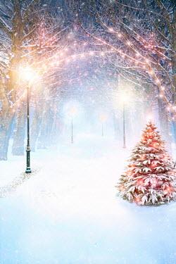Lee Avison pretty park avenue in winter with snow and illuminated streetlights